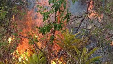 Foto de Foco de incêndio segue controlado em Tartaruga, Distrito de Milagres
