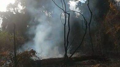 Foto de Cruz das Almas: Mata de Cazuzinha volta a pegar fogo