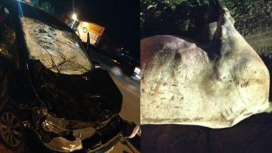 Foto de Animal morre e carro fica destruído em acidente na BA-046 em Santo Antônio de Jesus