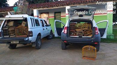 Foto de Amargosa: Operação combate o desmatamento e cativeiro ilegal de animais