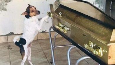 Foto de Cachorro chora em velório de dona na cidade Camaçari