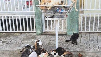 Foto de SAJ: Gatos sobem nas lixeiras, rasgam sacos e espalham o lixo no chão; moradores pedem providências