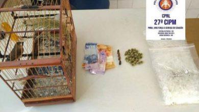 Foto de Em Cruz das Almas Polícia Militar apreende droga, munições e pássaro silvestre